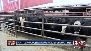 Cattle producers facing hard economic times