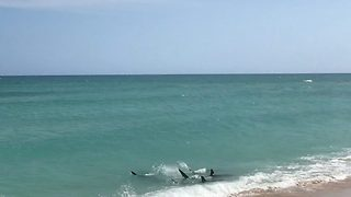 Shocking footage shows five hammerheads swimming just feet from family's backyard beach - Video