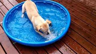 Excited Puppy Enjoys New Water Pool - Video