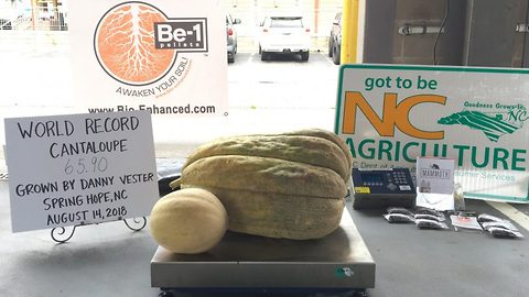 Cancer survivorgrandadsays beating the deadly disease helped him to grow the World's Biggest Cantaloupe