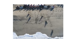 Aerial Footage Shows Sea Lions Scampering Back Into Ocean After Rehabilitation in California