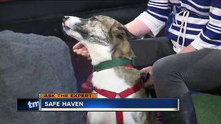 Ask the Expert: Foster families for abused pets - Video