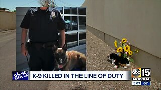 El Mirage police K-9 shot, killed by suspect during officer-involved shooting