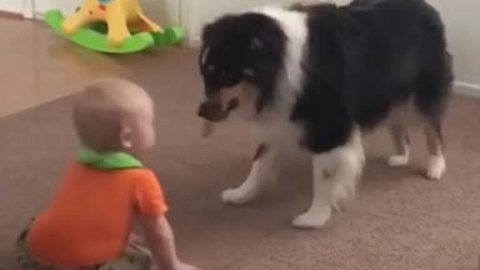 Baby and dog engage in precious playtime together