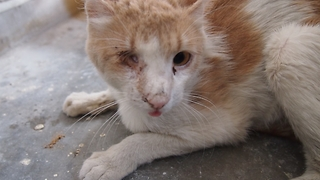 One-eyed street cat's amazing rescue transformation