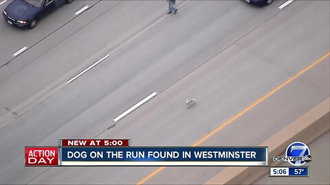 Is this your dog? Pup that got loose on Westminster highway found safe