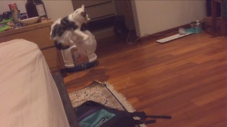 Cat stuck in plastic bag literally flips out - Video