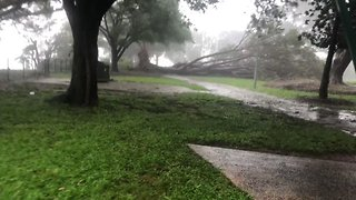 Cyclone Marcus Sweeps Through Darwin, Felling Trees - Video