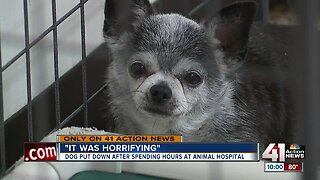 Rescue group unhappy with dog's treatment at Raytown clinic