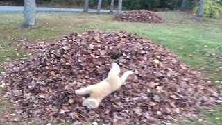 Plush Dog Toy Goes Frolicking Through Autumn Leaves - Video