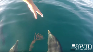 Guy Spots Dolphins Swimming With His Boat, Reaches Hand Towards Them; Gets Cool Response - Video