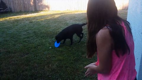 Smart Dog Catches Ball With Frisbee