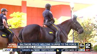 711 donates horse named Slurpee to the Baltimore Police Department - Video