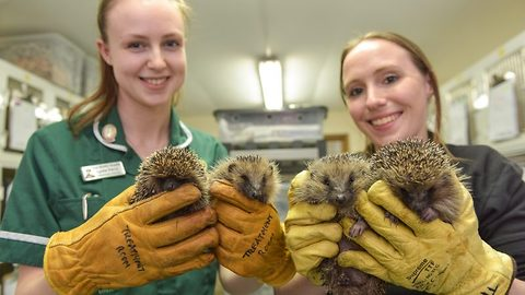 Hundreds of Britain's favourite prickly animals are feeling the cold