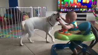 Baby adorably obsessed with chasing dog