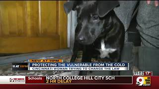 Protecting vulnerable pets from the cold - Video
