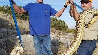 Snake Hunter Captures 6-foot Rattlesnake, Suffers Heart Attack