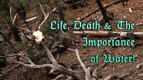 Life, Death & The Importance of Water!