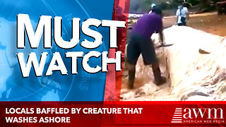 Locals Baffled By Creature That Washes Ashore, Then One Man Decides To Cut It Open [video] - Video