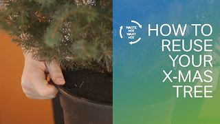 Waste not want not: How to reuse your x-mas tree! - Video