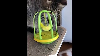 Lethal kitty catches singing toy bird