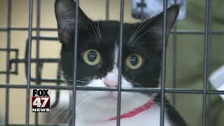 Ingham County Animal Control hosts all-cat adoption event in Lansing - Video