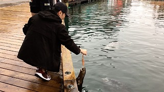 Otter Begs For Fish Snack From Friendly Tourist