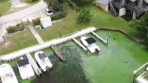 Martin County officials hoping to start cleaning algae by the end of week