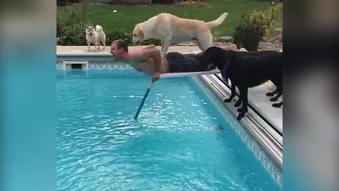 Eager Dogs Push Man On Diving Board Into A Pool