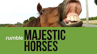 Behold the wonder of majestic horses in this phenomenal compilation footage