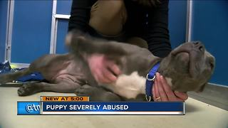Injured puppy rescued off of the street in Racine - Video