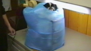 A Man Invents A Machine That Washes And Dries A Dog - Video