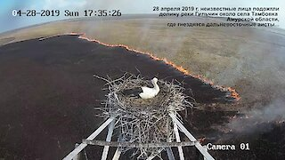 Time lapse captures stork's nest overlooking massive fire