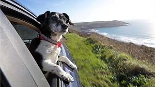 How To Keep Your Dog Safe And Happy On A Road Trip