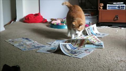 Cat has strange obsession with newspaper