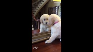 Puppy finds her best friend in the mirror