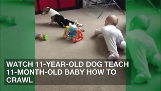 Watch 11-Year-Old Dog Teach 11-Month-Old Baby How to Crawl - Video