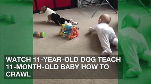 Watch 11-Year-Old Dog Teach 11-Month-Old Baby How to Crawl