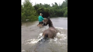 Farmers Rescue Horse Trapped in Flooded Texas Paddock - Video