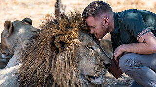 Daring Ranger Spends A Day With 5 Lions | BIG CAT LIFE