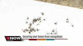 Mosquitoes multiplying in numbers, how to keep them out of your home