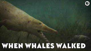 When Whales Walked