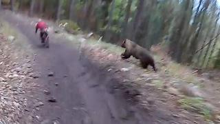 A Wild Bear Appears! - Video
