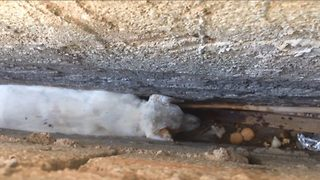 Heartwarming footage captures resuce of a dog who had slipped and become trapped between two walls