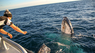 Boaters Have Close Encounter With Friendly Whales Off Augusta, Western Australia - Video