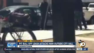 Unleashed pitbull attacks man outside city hall - Video