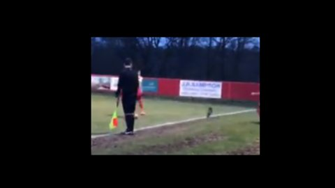 Pitch Invader Dog Runs Rings Around Players During Soccer Game