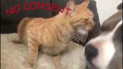 Typical cat has unresolved anger issues
