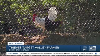 Thieves target Valley farmer, stealing dozens of eggs