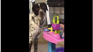 Dog gives priceless look to camera after baby squeals loudly